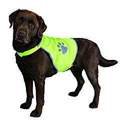 Product recommendation - highviz jacket for dogs