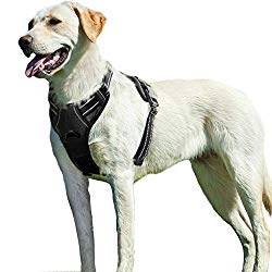 No-pull dog harness - product recommendation